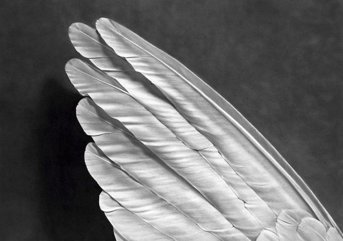 Robert Longo Angels Wing, Pigmentdruck, signiert, datiert, Auflage 25