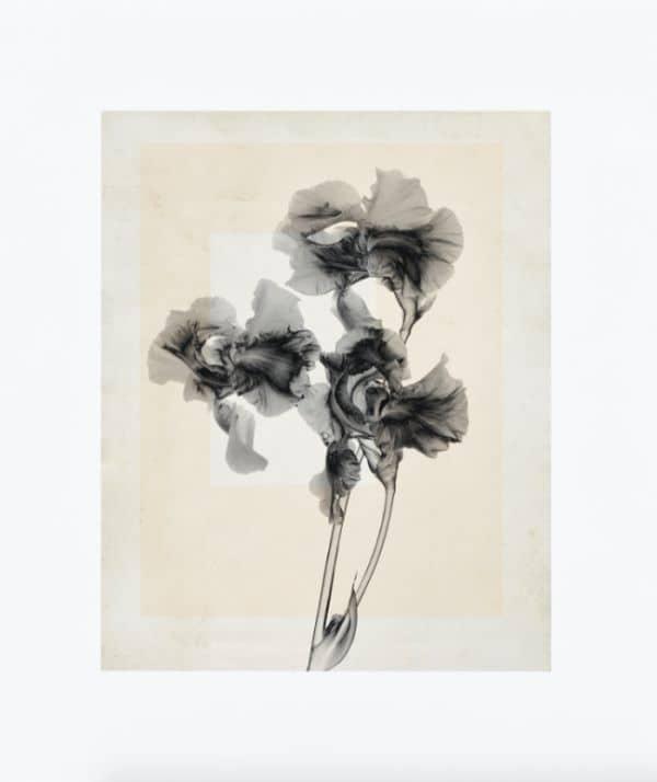 Thomas Ruff Flowers artwork